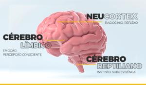 O Neurosales é a junção da neurociência às vendas. Entenda como ele explica comportamentos e pode auxiliar sua equipe a vender cada vez mais.